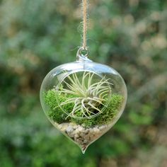 Hanging Glass Heart Vase Air Plant Terrarium by DingaDing Terrariums, the perfect gift for Explore more unique gifts in our curated marketplace. Wood Barrel Planters, Plastic Barrel Planter, Plastic Plant Pots, Plastic Planter Boxes, Window Planter Boxes, Hanging Terrarium, Air Plant Terrarium, Glass Terrarium, Hanging Plant