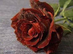 Rusty Brown Rose
