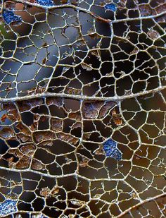 leaf skeleton or  lead cames (stained glass)? - James HUENINK