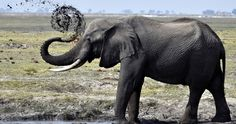 elephant mud puddle 4k ultra hd wallpaper