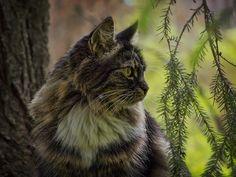 Lovely-KittyCats, darkface: _6140717