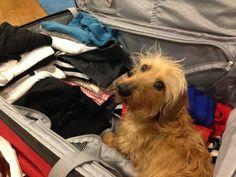 Sufrimiento: Cuando te estás preparando para las vacaciones y sabes que ellos saben que los estás abandonando.   31 Sentimientos especiales con los que todo dueño de perro está familiarizado