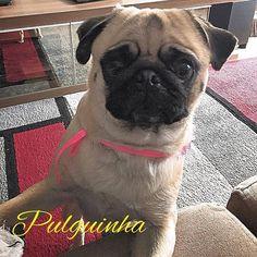 Sexta-feira!!!! Fim-de-semana chegando!!!!! #pugpulguinha #pug #puglove #puglife #pugs #pugsdaily #pugbrasil #pugriodejaneiro #pugrj #pugrio