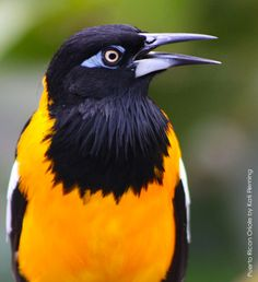 Wildlife Agency Adds Bird Species to Protected Migratory Bird List