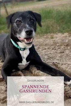 Beim Spaziergang mit Hund macht irgendwie jeder sein eigenes Ding? In diesem Video habe ich ein paar Tipps für euch, wie man seinen Hund draußen beschäftigen und gleichzeitig die Bindung zwischen Mensch und Hund verbessern kann. Hunde auslasten ist nicht nur toben und Ball werfen. Mit kleinen Konzentrations- und Gehorsamsübungen oder ein wenig Nasenarbeit könnt ihr eure Hunde sowohl körperlich als auch geistig auslasten. Humor, Pitbulls, Dogs, Animals, Community, Dog Accessories, Too Busy, Animales, Pit Bulls