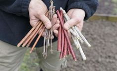 Steckholz ist eine einfache und sehr effiziente Möglichkeit, Bäume und Sträucher zu vermehren. Man braucht dafür weder spezielle Anzuchtgefäße noch ein Gewächshaus. Deshalb gelingt diese Vermehrungsmethode auch Anfängern in der Regel problemlos.