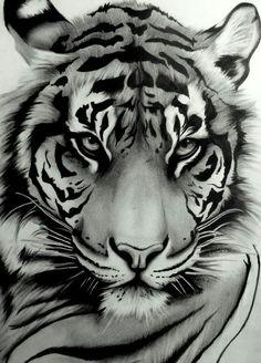 Draw Tigers My tattoo ~ Sumatran Tiger by ~artistelllie - Art Tigre, Animal Drawings, Art Drawings, Drawing Art, Drawing Ideas, Drawing Animals, Drawings Of Tigers, Art Sketches, Drawing Poses