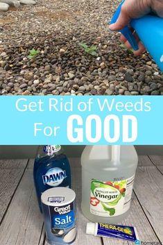 This is something everyone should know! #howto #diy #diys #craft #crafts #crafting #howto #ad #handmade #repurpose #garden #gardening #weeds #gardeningtips