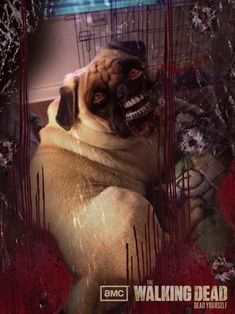 Turn yourself or your pet into a zombie! Then print out the pictures and use them as decorations.
