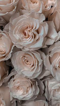 Laptop Wallpaper, Locked Wallpaper, Flower Wallpaper, Wallpaper Backgrounds, Iphone Wallpapers, Cream Aesthetic, Flower Aesthetic, Aesthetic Backgrounds, Aesthetic Wallpapers