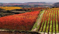 Ruta del Vino de la Rioja Alta