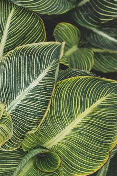 Tropical Leaves Closeup by René Jordaan Photography on @creativemarket