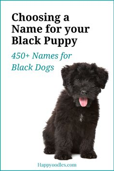 Are you looking for a name your black coated puppy? If so we have you covered. We have 450 dog names that are perfect for your black dog. Plus tips on how to pick the perfect name. (#blackdognames, #blackdognamesforpuppy, #uniquedognames) Big Dog Names, Black Dog Names, Cute Names, Puppy Names, Gsd Dog, Gsd Puppies, Black Puppy, Cute Dog Photos, Dog Hacks