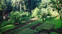 Small Vegetable Garden Design Marvelous Small Vegetable Garden Design, Garden Designs » Vegetable Garden