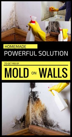 Remove Mold From Walls, Remove Mold Stains, Get Rid Of Mold, Mold On Walls, Cleaning Mold, Household Cleaning Tips, Cleaning Walls, House Cleaning Tips, Green Cleaning