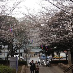 Lodging in Apartment With Mini Poodle Near Beautiful Park in Tokyo | TrustedHousesitters.com