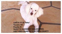 "#LOSTdog 6-17-15 ""Niko"" #Tucson #AZ #Poodle M SUZETTE GUERRERO BALLESTEROS LOST AND FOUND PETS OF PIMA COUNTY https://www.facebook.com/LostAndFoundPetsOfPimaCounty/posts/818751001555362"