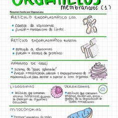 Instagram Explore #organelos HashTags Photos and Videos Dna Molecule, Hashtags, Medicine, Study, Explore, Photo And Video, School, Videos, Nursing