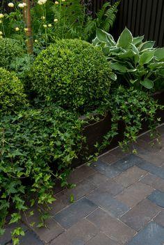Almbacken Trädgårdsdesign Terraced Backyard, Hedera Helix, Evergreen Garden, Garden Cottage, Front Entrances, Garden Inspiration, Garden Ideas, Landscape Architecture, Trees To Plant