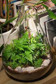Good Stuff: Botanique Terrariums