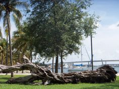 Gnarly – Bayfront Park, Miami | Miami Daily Photo