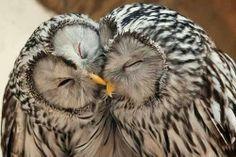 Olws in love