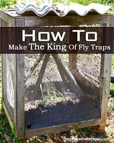 The Venus fly trap an interesting, captivating, easy care plant. Our guide offers TIPS & MORE] on growing and feeding, happy, healthy Venus flytraps. Fly Control, Diy Pest Control, Easy Care Plants, Plant Care, Homemade Fly Traps, Fly Repellant, Diy Fire Pit, Carnivorous Plants, Garden Pests