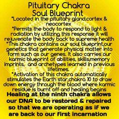 Ninth Chakra: Pituitary Chakra, Soul Blueprint of Christ Consciousness