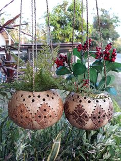 Hanging Air Plants, Hanging Planters, Exotic Plants, Small Plants, Flower Planters, Flower Pots, Coconut Shell Crafts, Small Outdoor Patios, Flower Pot Design