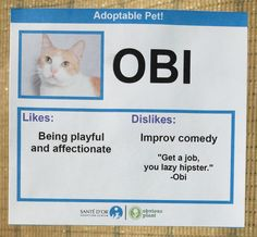 I Gave These Cats Bizarre Likes And Dislikes To Help Get Them Adopted