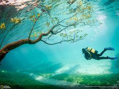 ナショナルジオグラフィック//オーストリアのトラゲスに緑の池がある。春の雪解け水は、10メートルほど湖の水嵩を上昇させ、ハイキングコースや草原、木々を覆う現象は数週間続く。 その結果、魔法のようなダイビング風景が撮影出来た。