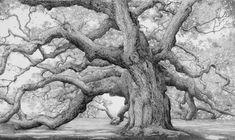ideas for angel oak tree tattoo Landscape Drawings, Landscape Art, Art Drawings, Pencil Drawings, Angel Oak Trees, Willow Tree Wedding, Oak Tree Tattoo, Tree Sketches, Tinta China