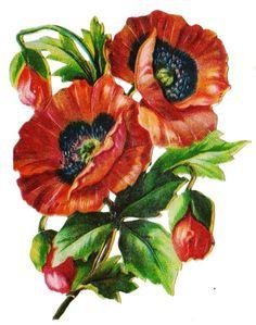 Glanzbilder - Victorian Die Cut - Victorian Scrap - Tube Victorienne - Glansbilleder - Plaatjes : Mohnblumen