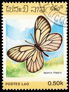 Laos, 1986 Aporia hippia