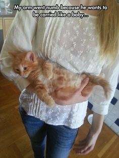 I have a cat like that, think she's a baby wants to be carried  around all the time. Very cute! Funny animals