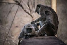 Monkey Business Photography by Nick Laborde