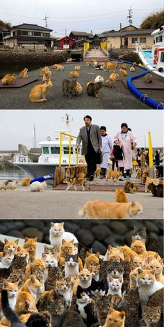 These Cats Occupied An Island In Japan