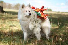 Oh. My. God. The cute. Okami Amaterasu cosplayed by Dante the dog. Photographed by GanguroLove. (via Cosplay Blog)