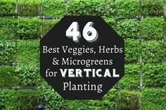 46 Best Veggies, Herbs & Microgreens for Vertical Planting