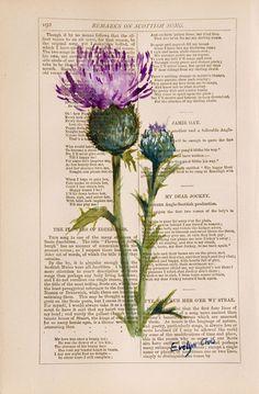 Thistle on Robert Burns poems...