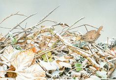 Winter Woodland Floor - Water Colour & Gouache Illustration by markgeorgephotography.co.uk, via Flickr
