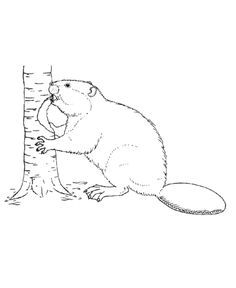 Wild animal coloring page | Beaver cutting down a tree