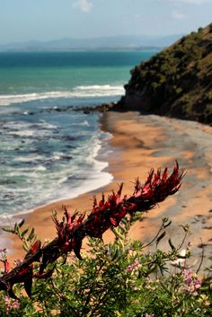 Mixed Sand Beach ~ South of Timaru, New-Zealand
