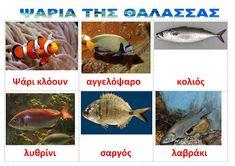 dreamskindergarten Το νηπιαγωγείο που ονειρεύομαι !: Λίστες αναφοράς για τα ψάρια και τα ζώα της θάλασσας Sea Theme, Summer Crafts, Underwater, Projects To Try, Fish, Blog, Animals, Animales, Animaux