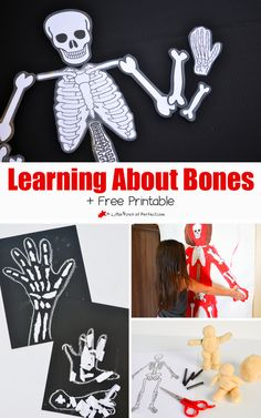 Learning About Bones Activities for Kids and Free Skeleton Printable (Skeleton also makes a fun Halloween decoration) Human Body Activities, Health Activities, Kids Learning Activities, Kindergarten Activities, Fun Learning, Preschool Science, Science Lessons, Lessons For Kids, Science For Kids