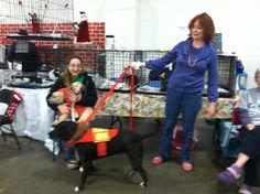 Secaucus Animal Shelter Secaucus, NJ 07094 | Events