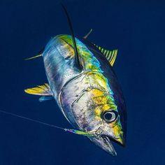 Yellowfin Tuna with Underwater Camera - Picture of Hawaii Marlin Fishing, Kailua-Kona - Tripadvisor Underwater Creatures, Ocean Creatures, Deep Sea Fishing, Fly Fishing, Fishing Rods, Marlin Fishing, Sport Fishing Boats, Yellowfin Tuna, Salt Water Fish