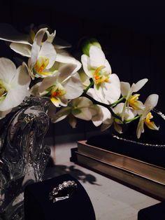 Pequenas orquídeas brancas.