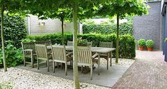 Garden Book - 42 amazing ideas together around the pergola and how to arrange trees . Terrace Garden, Garden Trees, Courtyard Gardens, Garden Gazebo, Back Gardens, Outdoor Gardens, Modern Gardens, Garden Modern, Small Gardens