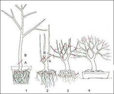 Bonsai, hoe maak ik zelf een #bonsai via gespecialiseerde snoeitechnieken?(1384488552) #bonsaitrees